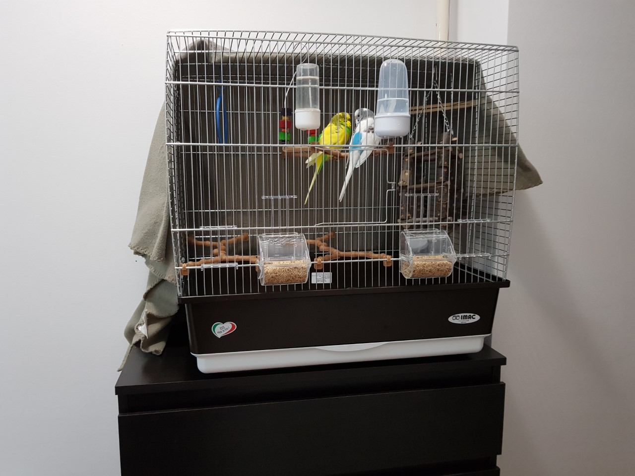 Budgie cage and their acomodation