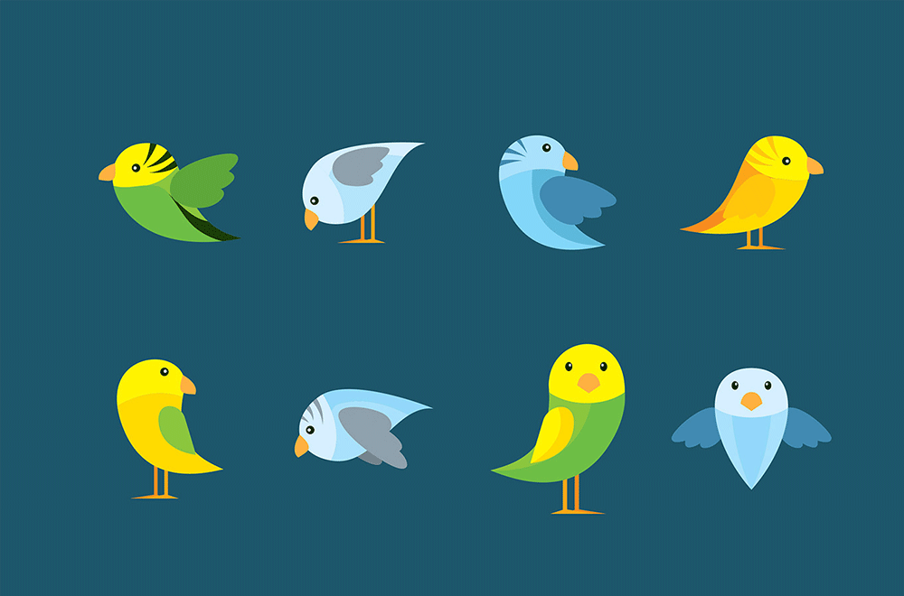 Different types of parakeets and what you should know