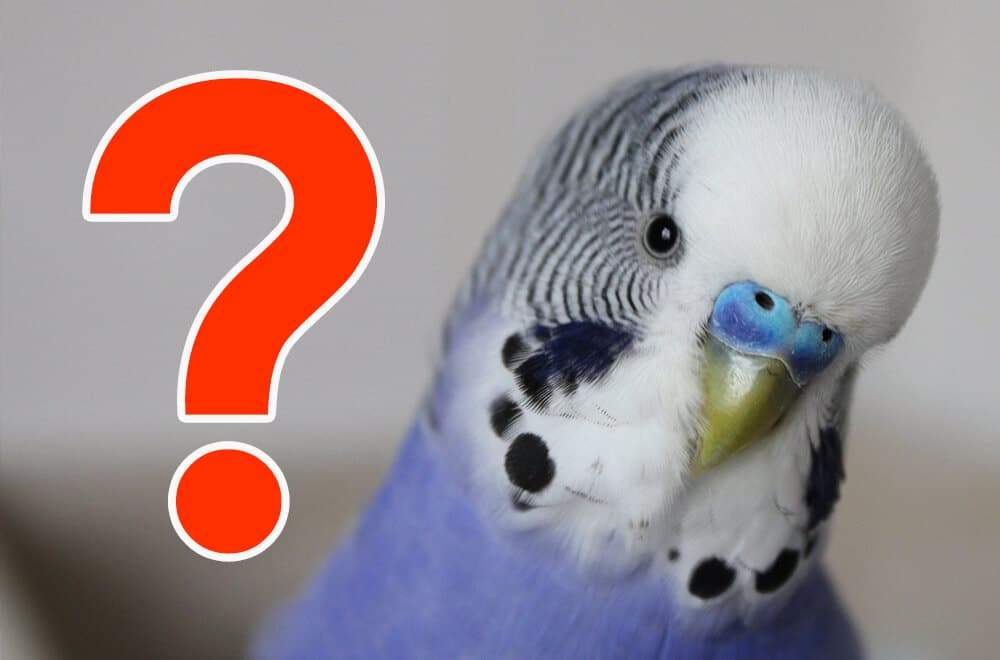 Parakeet common questions & answers (FAQ)